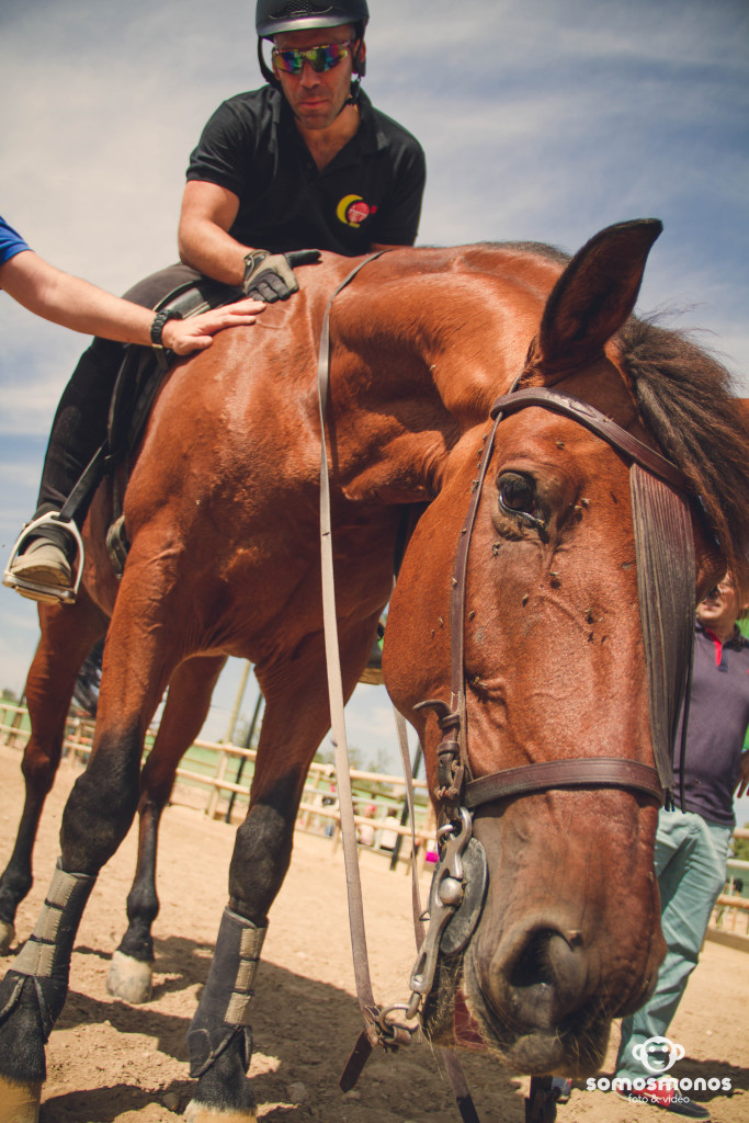 Assaig del Cavall (62)